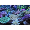 Aquaforest Reef Salt Cubeta 22 kg