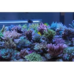 123 Kit Aquaforest Component 1+,2+,3+